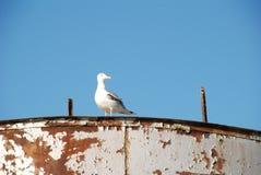 在腐朽的小船的海鸥 免版税库存图片