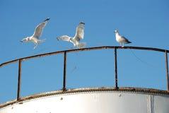 在腐朽的小船的海鸥 免版税库存照片