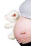 在腹部附近的怀孕的暂挂熊 免版税图库摄影