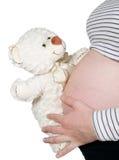 在腹部附近的怀孕的暂挂熊 免版税库存照片