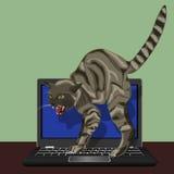 在膝上型计算机的恼怒的猫 免版税库存照片