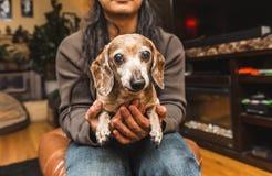 在膝部的老狗 免版税库存图片