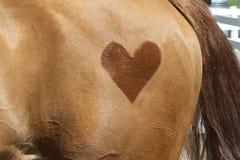 在臀部的心脏 库存图片