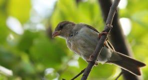 在自然世界的鸟 免版税库存照片