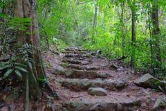 在自然中的石梯子 图库摄影