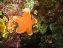 在自然五颜六色的珊瑚的黄色海星在热带太平洋 库存图片
