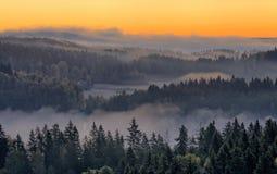 在自然保护公园的有薄雾的早晨 免版税库存图片