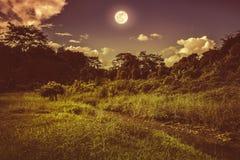 在自然保护区上的明亮的满月在森林,平静natur里 免版税库存照片