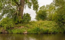 在自然保护的狂放的植被在小河的银行 库存图片