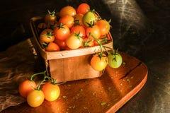 在自然光的黄色葡萄蕃茄 免版税库存图片