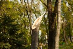 在自然剧变以后的城市公园 落的树和分支在自然灾害以后 在浩劫以后的城市公园 在spri的灾难 库存图片