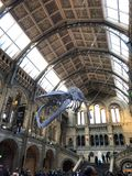 在自然历史博物馆的鲸鱼 免版税库存图片