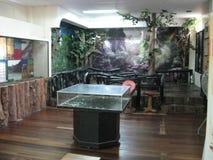 在自然历史博物馆里面的显示在洛斯巴诺斯,菲律宾附近 图库摄影