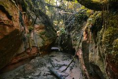 在自然地被形成的洞之间的狭窄的森林河 免版税库存图片