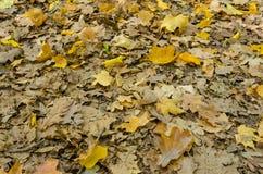 在自然地面的秋叶 免版税库存图片