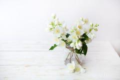 在自然春天背景的茉莉花花 免版税库存照片