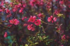在自然本底的春天开花 库存图片