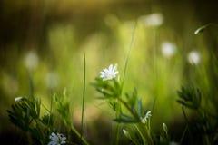 在自然本底的美丽的花 免版税库存照片