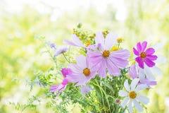 在自然本底的野花 库存照片