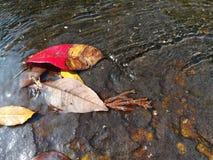 在自然水路的秋叶 免版税库存图片