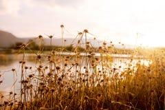 在自然湖的日落 库存图片