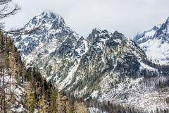 在自然灾害以后的云杉的森林和在高Tat的多雪的山峰 库存照片