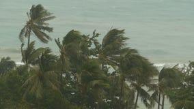 在自然灾害飓风期间的海边风景 猛烈的旋风风摇摆可可椰子树 重的热带风暴 股票录像