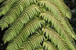 在自然照片的绿色蕨植物叶子 库存照片