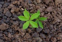 在自然生长步概念的农业环境 免版税库存照片