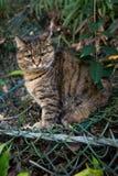 在自然的一只猫 免版税图库摄影