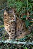 在自然的一只猫 免版税库存照片