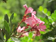 在自然的一朵花 库存图片