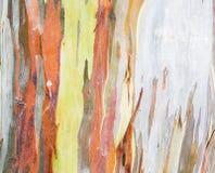 在自然的五颜六色的树皮 库存图片