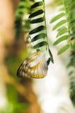 在自然的五颜六色的蝴蝶 免版税图库摄影
