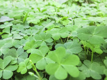 在自然的叶子绿色 库存图片