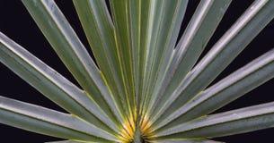 在自然的对称 库存照片