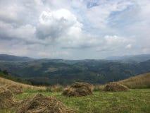 在自然的山干草 库存照片