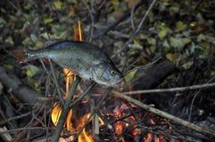 在自然的烤鱼 免版税库存照片