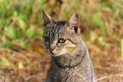 在自然的猫 免版税库存照片