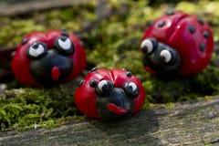 在自然的瓢虫家庭 免版税库存照片
