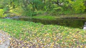 在自然的秋天小河 股票视频