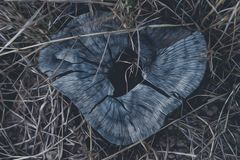 在自然的自然以后难倒绘画社区摄影自然旅行的概念 图库摄影