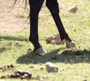 在自然的马` s蹄 库存图片