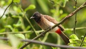 在自然的鸟和搜寻食物 免版税库存照片