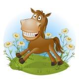 在自然的滑稽的马 免版税库存图片