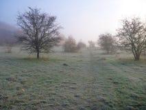 在自然的Misfy冷淡的秋天早晨 库存照片