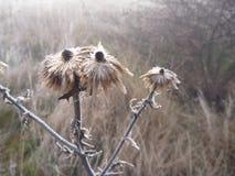 在自然的Misfy冷淡的秋天早晨 免版税图库摄影