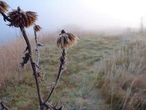 在自然的Misfy冷淡的秋天早晨 免版税库存照片