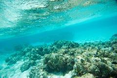 在自然礁石的马鲅蝴蝶鱼 库存图片
