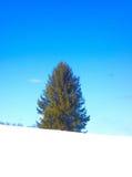 在自然纯净的圣洁简单的朴素的圣诞树 库存图片